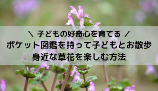 【好奇心を育てる】ポケット図鑑を持って子どもとお散歩|身近な草花を楽しむ方法