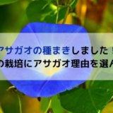 アサガオの栽培 必要なもの 栽培時期 種まき時期 子どもと栽培 アサガオ 育てやすい